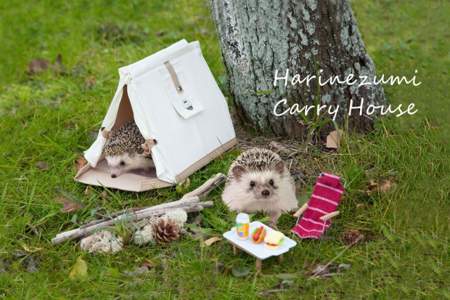 Kawaiii!! Harinezumi Carry House aka casita prechiosa para erizos moninos!!