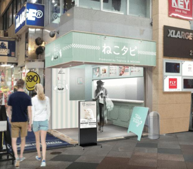curiosidades japon  Nuevo Neko Cafe combo con té de burbujas que lo rompe en Japón!