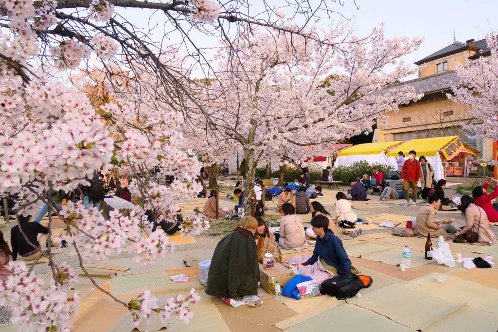 ¡Hanami del amor con los productos más top en Japonshop de cerezos en flor!