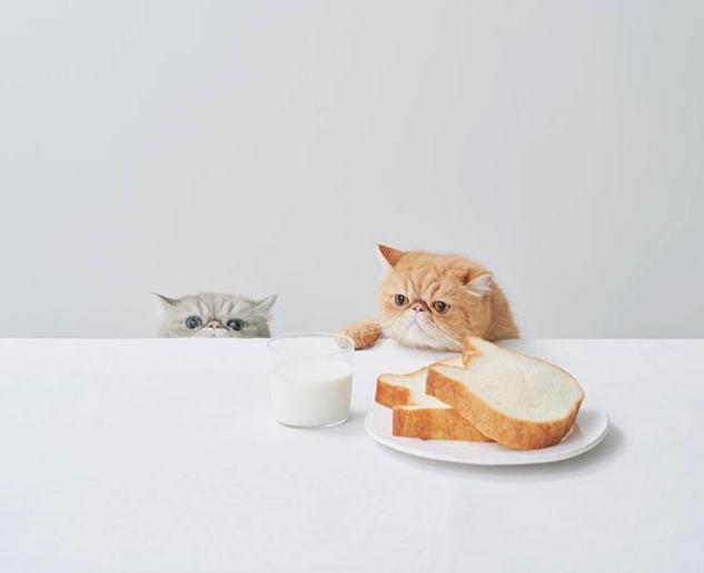 ¡Pan con forma de Neko! Disfruta de este pan tan especial ahora también on-line!