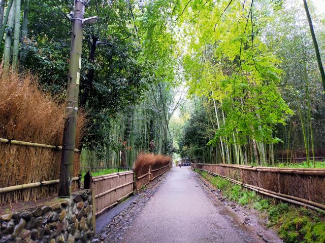 Paisajes del Coronavirus en Japón - Paseando por Kyoto