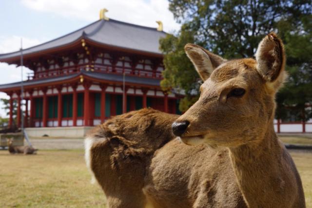Te contamos como están los ciervos de Nara durante el Coronavirus