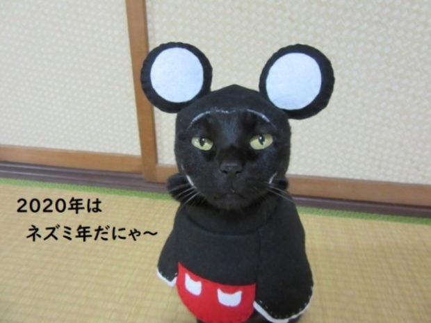 curiosidades japon  Conoce a Chocola el neko cosplayer