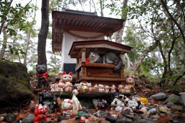 curiosidades japon  Nekos en Japón encuentran en los templos el refugio perfecto ante la lluvia