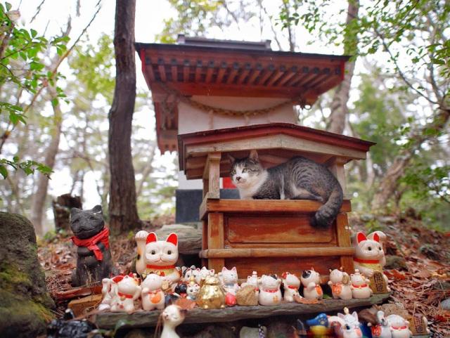 Nekos en Japón encuentran en los templos el refugio perfecto ante la lluvia